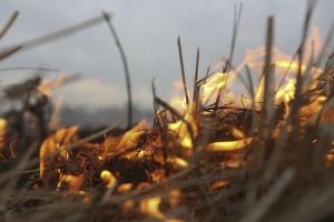 Пожежа у Чорнобильській зоні ліквідована