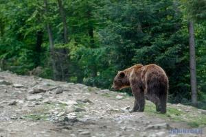 У Фінляндії автомобіль зіткнувся з ведмедем - усі живі