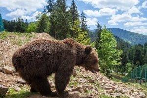 Конфискованным львам и медведям нашли новые дома