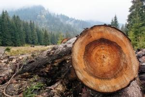 Контроль законності рубок лісів: на Чернігівщині запустили пілотний проєкт