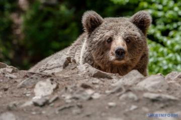 Les ours se sont réveillés dans le zoo de Kyiv