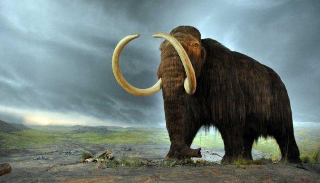 """Американские ученые собираются """"воскресить"""" мамонта"""