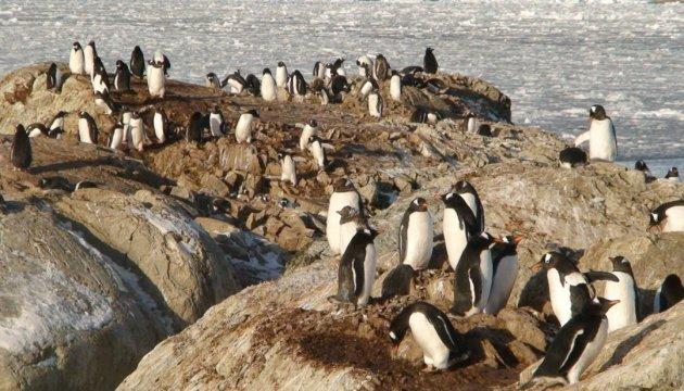 В Києві +32, а тим часом пінгвіни передають йому привіт з полюсу