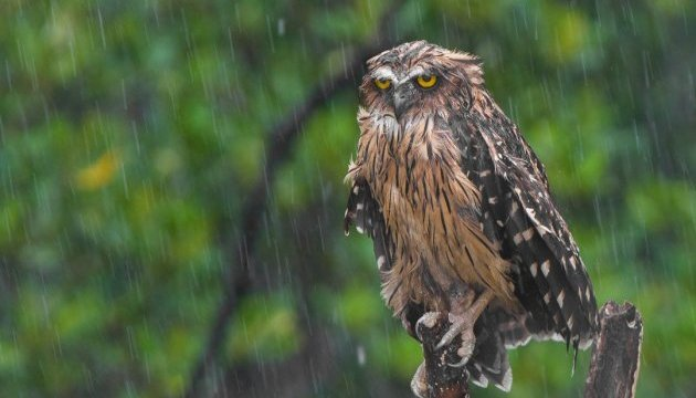 Сьогодні більшість областей накриють сильні дощі та грози
