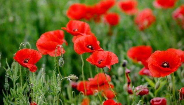 8. und 9. Mai – Tage des Gedenkens und der Versöhnung, die den Opfern des Zweiten Weltkriegs gewidmet sind