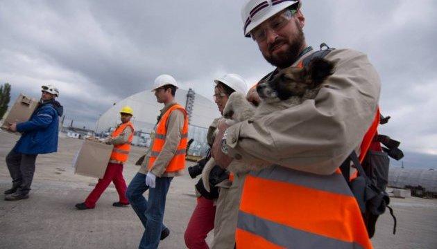 Дві сотні безпритульних цуценят із Чорнобильської зони вивезуть до США
