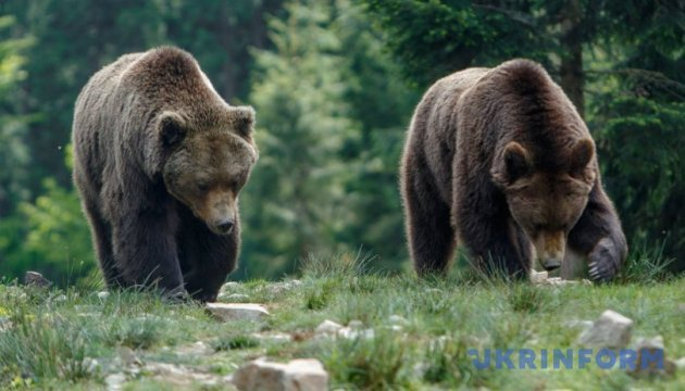 西涅维尔公园邀请游客观看棕熊