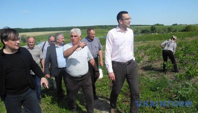 Сири і горіхова плантація: в ОТГ на Буковині відроджують виробництво