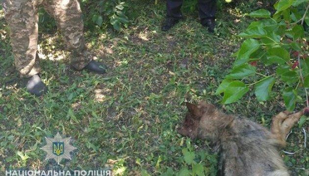 На Николаевщине бешеный волк забежал в город и бросался на людей