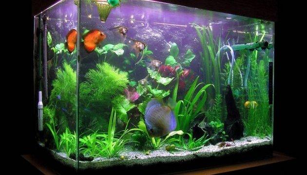 e2fd9e029dd3df Екзотичні акваріумні рибки: які є і скільки коштують