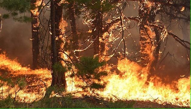 У Канаді продовжують палати десятки лісових пожеж