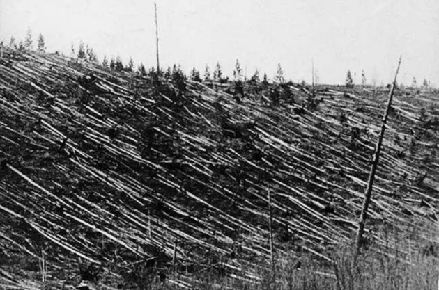 Деревья после падения Тунгусского метеорита / Фото: medium.com
