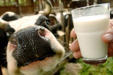 Ukraine to supply dairy products to Libya
