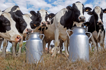 Ukraine's milk production down 3.6% in January-May 2020