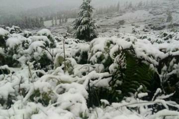 L'hiver au milieu de l'été : La neige a couvert la région de Transcarpatie (photos)