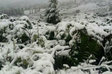 La nieve cae en las montañas de los Cárpatos