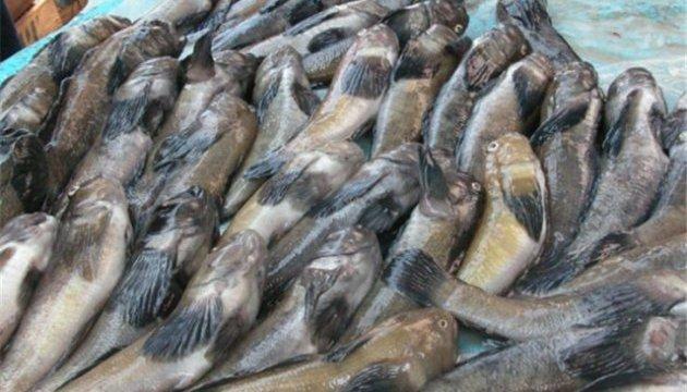 Браконьеров оштрафовали на 2,5 миллиона за незаконный вылов рыбы