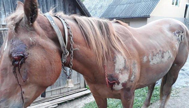 На Закарпатті п'яний чоловік познущався з коня