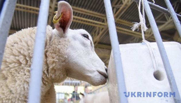 В Киеве на АГРО-2018 состоялся уникальный аукцион животных