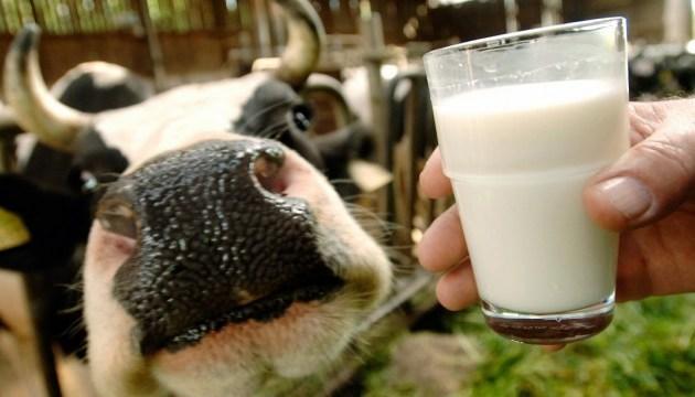 В Украине - новые требования к качеству молока
