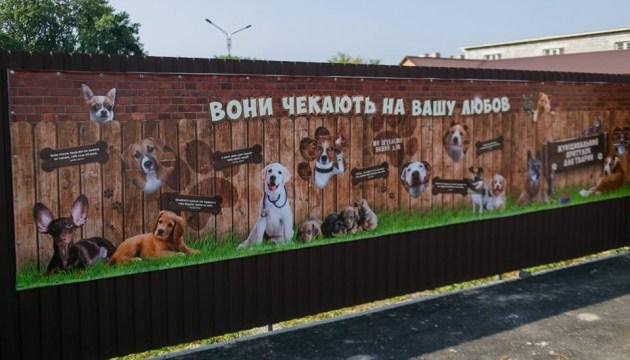 Вінницький міський голова започаткував флешмоб із захисту безпритульних тварин