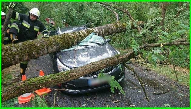 Поваленные деревья, оборванные провода — по Польше пронесся сильный ураган