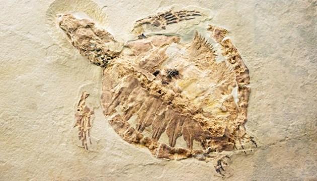 Китайский фермер нашел окаменелости юрского периода