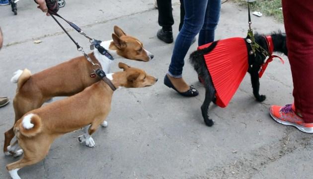 Четвероногий марафон: в Киеве провели массовый забег с собаками