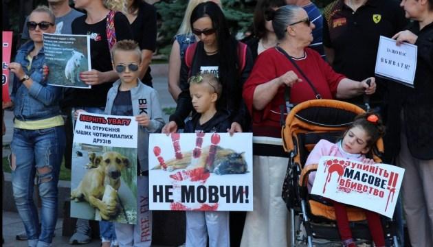 У Кропивницькому за два місяці отруїли дві сотні собак – зоозахисники