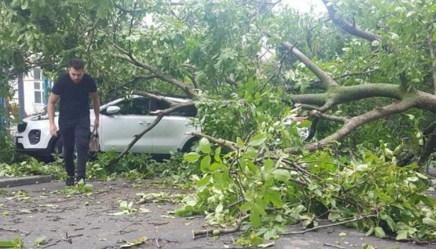 В Киеве дерево привалило три автомобиля
