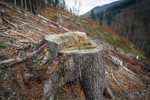 Закон про заборону суцільних вирубок лісів у Карпатах опублікували