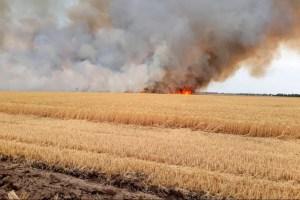 На Харківщині згоріло 23 га ячменю та близько 20 га стерні