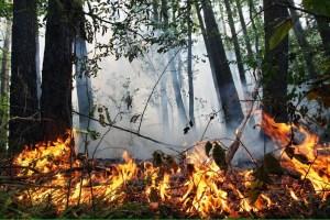 На Киевщине сохраняется чрезвычайная пожарная опасность