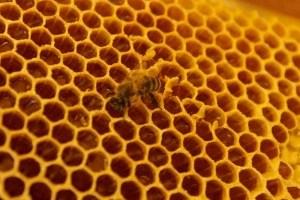 Етнофестиваль на Тернопільщині частує медовими смаколиками