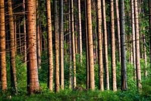 Лесной музей под открытым небом можно посетить на Закарпатье