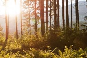 Украинские национальные парки оцифруют