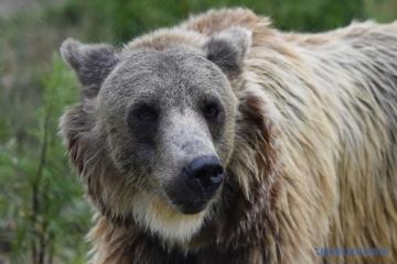 Aujourd'hui marque la Journée mondiale pour sauver les ours