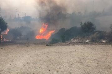 Extreme level of fire hazard remains in Ukraine