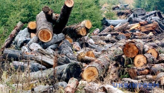 Суд заборонив вирубку лісів військового полігону на Житомирщині