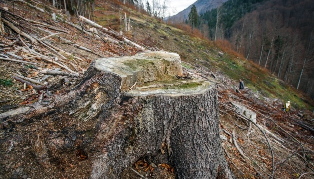 Austrian Embassy in Ukraine commends Poroshenko's veto on wood export ban