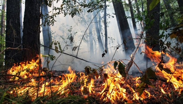 Extreme level of fire hazard remains in some Ukrainian regions