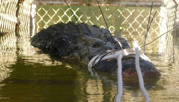 У Австралії піймали крокодила-монстра