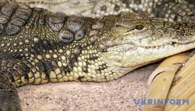 В курортной Кирилловке на берегу моря нашли мертвого крокодила