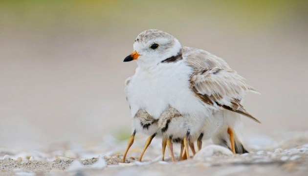 Птичьи истории: лучшие фото крылатых со всего мира