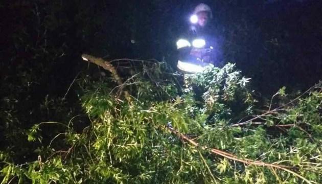 Поваленные деревья и сорванные крыши – по Львовской области пронесся ураган