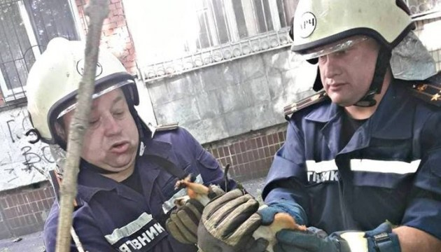 Rettungsaktion in Dnipro: Einöhrchen aus dem Netz befreit – Fotos, Video