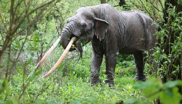 У Франції фермер чотири роки ховав череп далекого предка слона