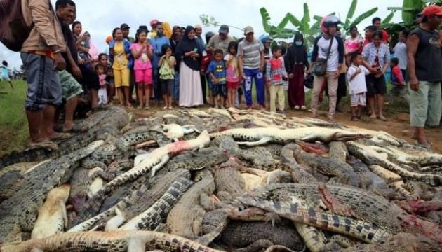 Кривава помста: в Індонезії розлючені мешканці вбили 300 крокодилів