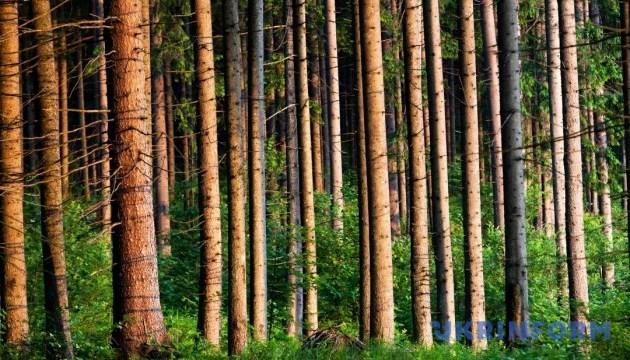 Лісовий музей просто неба можна відвідати на Закарпатті