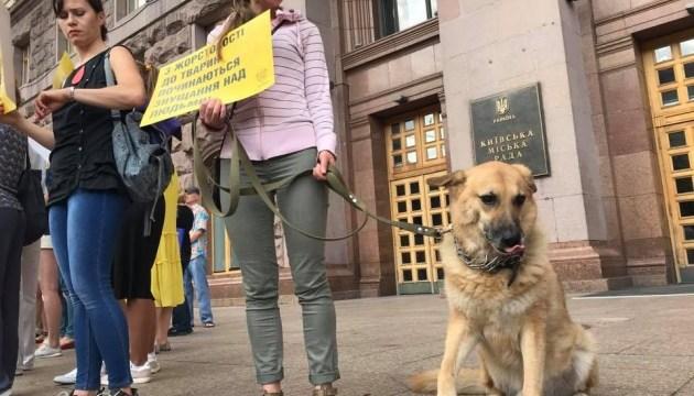 Україна - не живодерня: захисники безпритульних тварин прийшли під КМДА з собаками